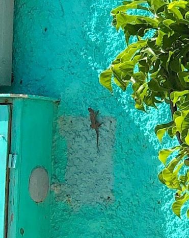 A little lizard kept us company at lunch