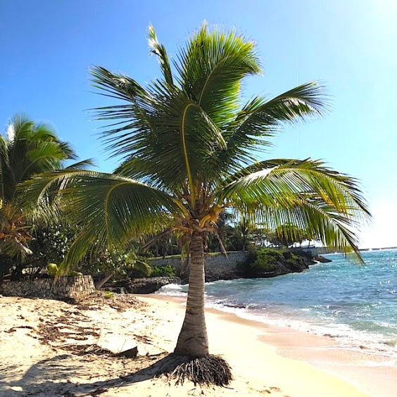 Sports Beach palm