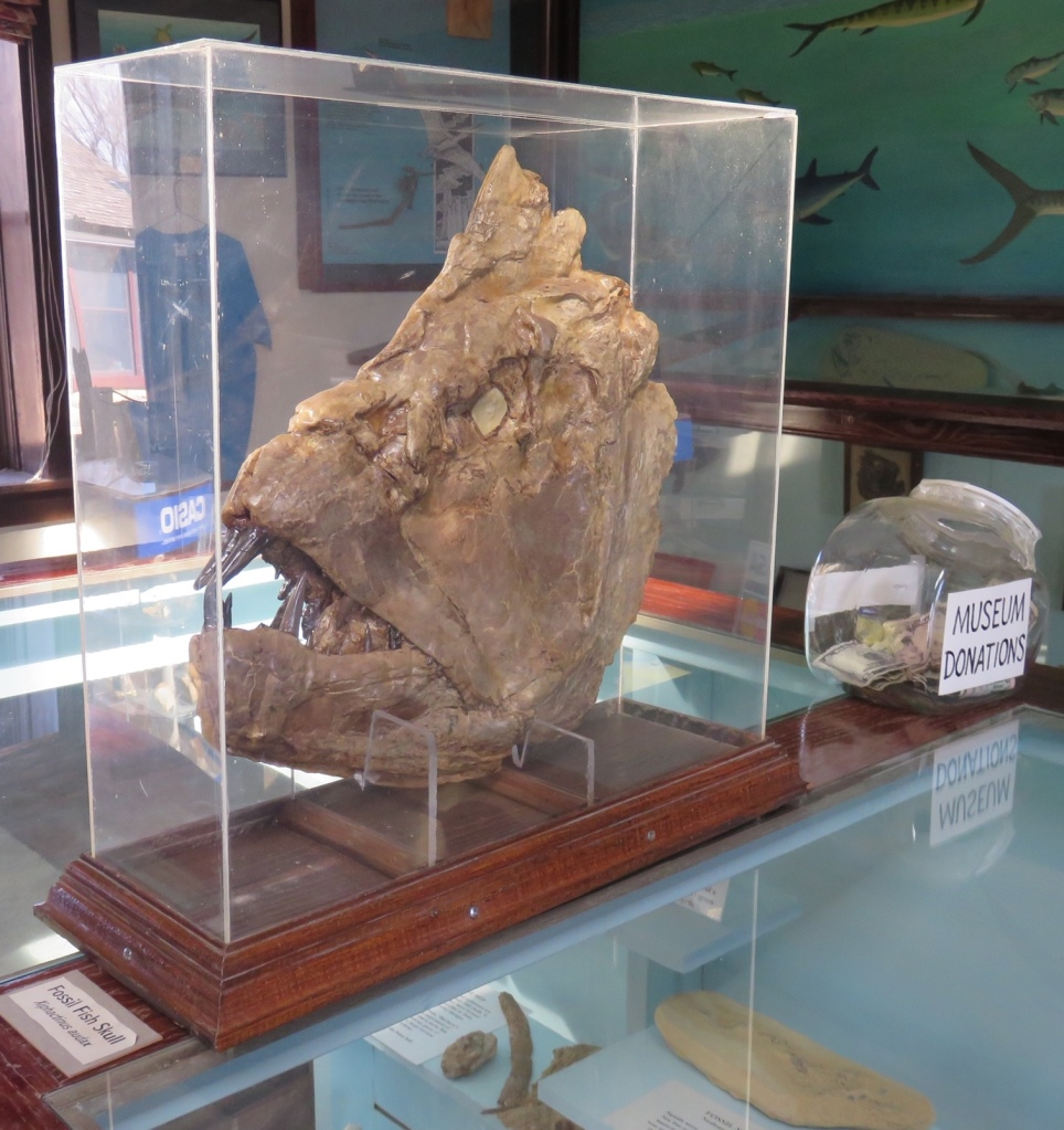 Large prehistoric fish head fossil on display at Keystone Gallery in southeastern Logan County, Kansas